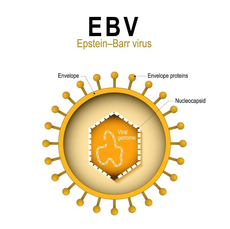 Wirus Epsteina-Barr (EBV) - jakie badania wykonać?