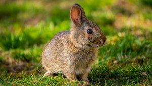 IgE sp. Naskórek królika (E82)