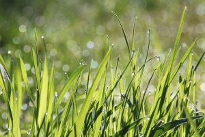 IgE sp. Profil alergologiczny – TRAWY i CHWASTY – 10 alergenów