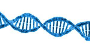 HBV wirus zapalenia wątroby typu B (WZW B) – ilościowo