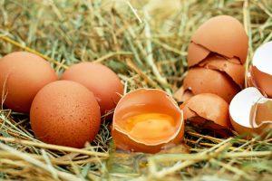 IgE sp. Białko jaja kurzego (F1)