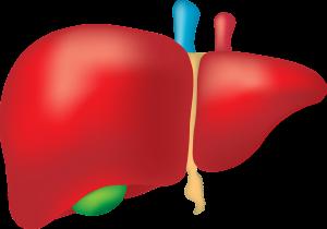 P/c p/antygenom mikrosomalnym wątroby met. IF, LKM p/ciała