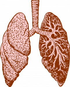 Chlamydia pneumoniae p/c IgG