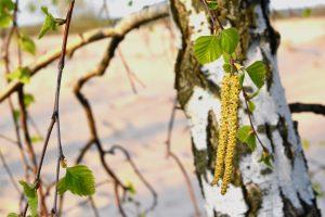 Profil alergologiczny EUROLINE DPA-Dx Pyłki