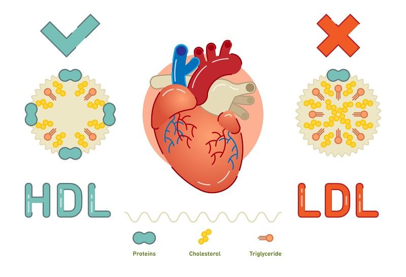 Cholesterol nie-HDL